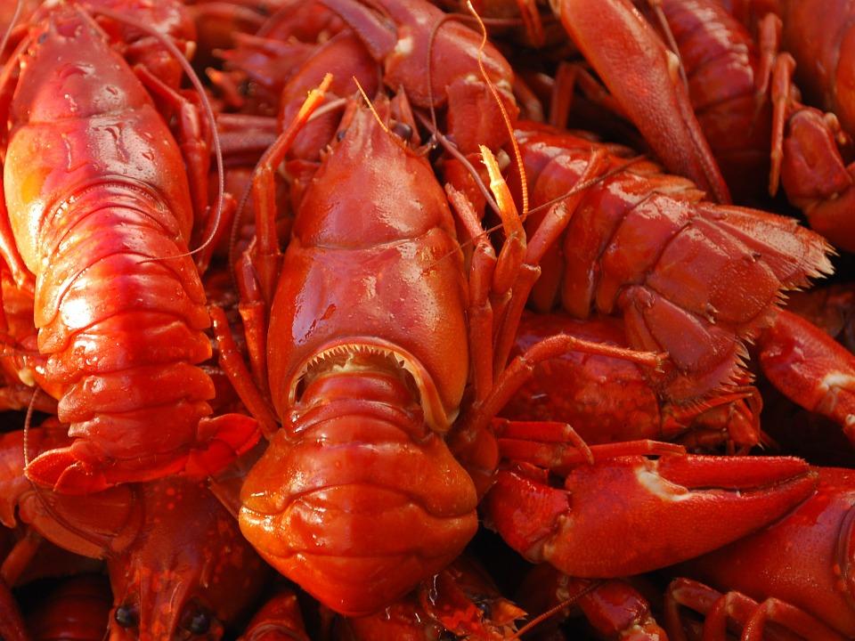 ¿Cómo escoger buenos distribuidores de mariscos para hostelería? - Pescados y Mariscos Angelito